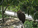 Yalta Zoo 02.jpg