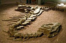 Yangchuanosaurus - Wikipedia