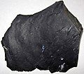 Zaleski Flint (Middle Pennsylvanian; west of Creola, northern Vinton County, Ohio, USA) 8.jpg