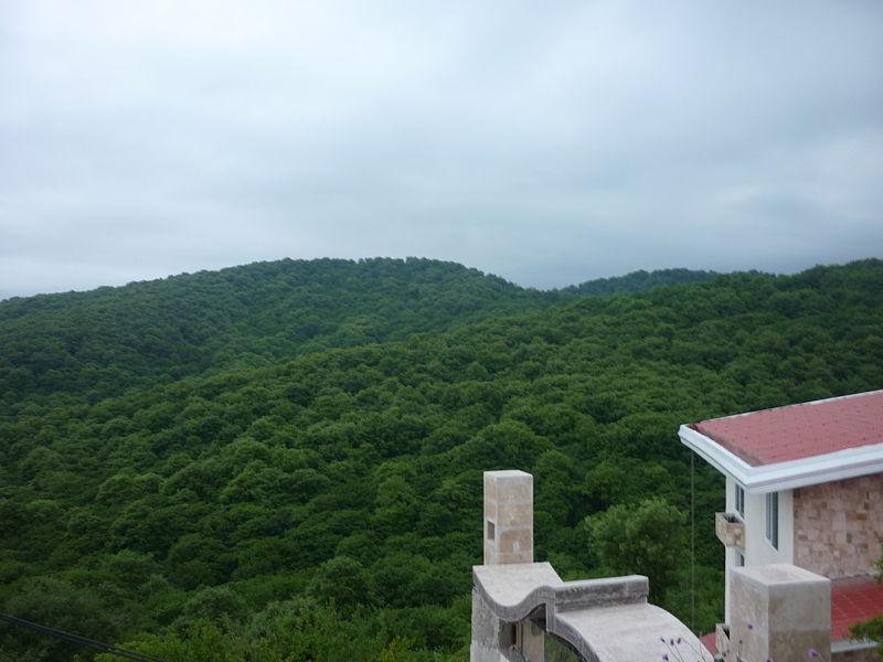 File:Ziaro-Jungle northren iran -amol.JPG