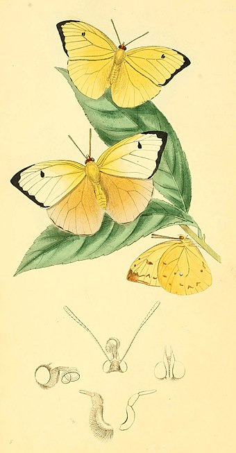 Zoological Illustrations Volume I Plate 5.jpg
