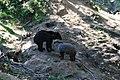 Zoologická zahrada Tábor - Větrovy (47).jpg