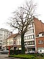 Zottegem Heldenlaan Vredesboom (5) - 191117 - onroerenderfgoed.jpg