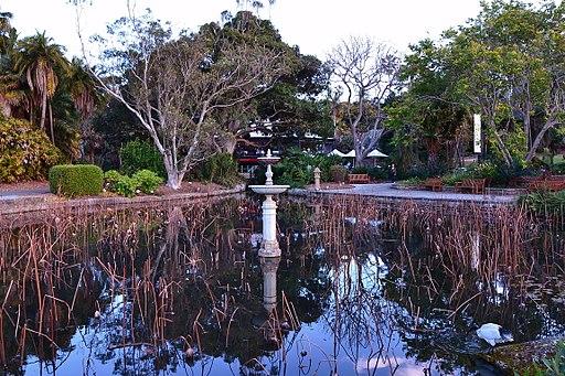 Sydney Botanical Gardens pond