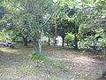 Árvores da amazonica.JPG