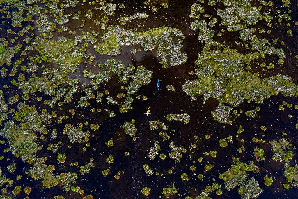 Гідрологічний заказник Ірдинське болото