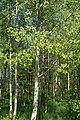 Асіна ў Севастопальскім парку Мінска.jpg