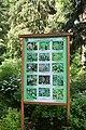 Ботанічний сад НУБіП DSC 0534.jpg