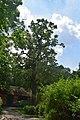Ботанічний сад НУБіП DSC 0538.jpg