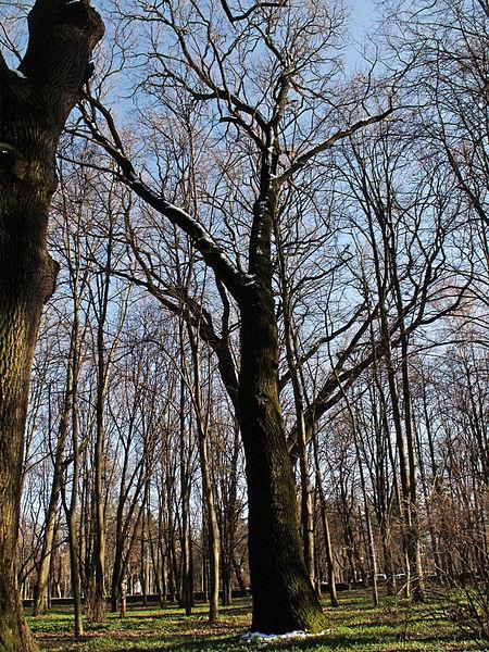 File:Вінниця - центральний парк 10.JPG