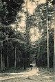 Дарницький ліс.jpg
