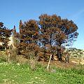Дороги в Эриче, Сицилия - panoramio (3).jpg