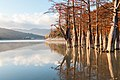 Кипарисовое озеро осенью.jpg