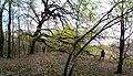 Ландшатний заказник на лівому березі озера Конча (17).jpg