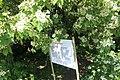 Національний ботанічний сад ім. М.Гришка Букова діброва 03.jpg