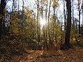"""Парк """"Братцево"""" золотая осень. Южное Тушино.jpg"""