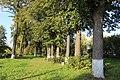 Парк городской улица Чкалова. Липы.jpg