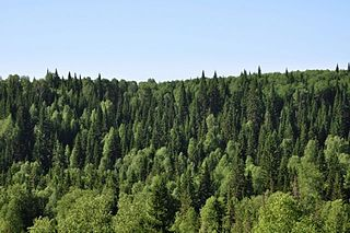 Guryevsky District, Kemerovo Oblast District in Kemerovo Oblast, Russia
