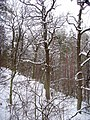 Чернечий Ліс 30.jpg