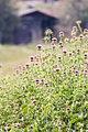 פרחים באתר.jpg