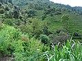 कलालपसे - panoramio (5).jpg