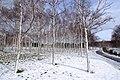 前田森林公園(Maeda forest park) - panoramio (5).jpg