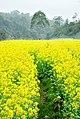 广州最美乡村—红山村 - panoramio (36).jpg