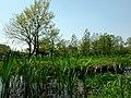 矢川緑地 - panoramio - moonlightpeople.jpg