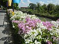 0032Views of Agnaya irrigation canals 30.jpg