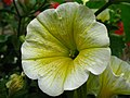 1563 - Salzburg - Haus Wartenberg - Flower.JPG