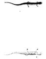 1847 BostonJournal NaturalHistory v5 illus5.png