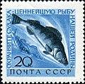 1960 CPA 2467.jpg