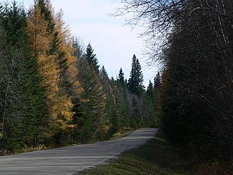 Prince Albert National Park - Mixed forest alongside roadway