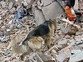 2008년 중앙119구조단 중국 쓰촨성 대지진 국제 출동(四川省 大地震, 사천성 대지진) SV400429.JPG