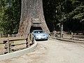 20080904 21 Leggett, California.jpg