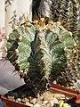 2010. Выставка цветов в Донецке на день города 70.jpg