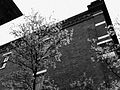 2011-365-123 Black and White Spring (5686113418).jpg