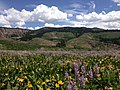 2014-06-24 12 14 41 View east across a field of wildflowers towards the Fox Creek Mountains from Elko County Route 748 (Charleston-Jarbidge Road) on the east side of Copper Basin, Nevada.jpg
