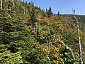 2017-09-11 15 07 08 View east across the forest from the Sunset Ridge Trail at about 3,280 feet above sea level on the western slopes of Mount Mansfield in Underhill, Chittenden County, Vermont.jpg