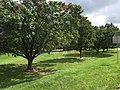 2017-09-18 11 54 55 Green lawn and Callery Pears along Franklin Farm Road near Old Dairy Road in the Franklin Farm section of Oak Hill, Fairfax County, Virginia.jpg