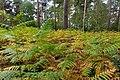 2019-10-05 Hike Forst Leucht. Reader-16.jpg