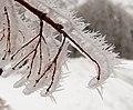 2021-01-16 14-41-47 gelée-blanche.jpg