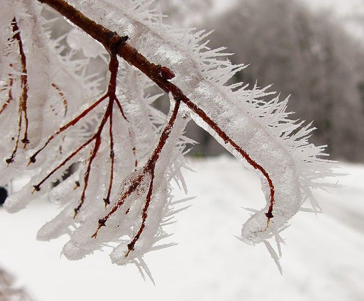 Photos du 16/01/2021 726px-2021-01-16_14-41-47_gel%C3%A9e-blanche
