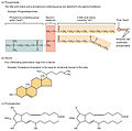 222 Other Important Lipids-01.jpg