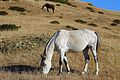 2 лошади в Сочинском заказнике.JPG