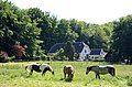 3 horses on a sunny day 26 May 2012 at Schaarsbergen - panoramio.jpg