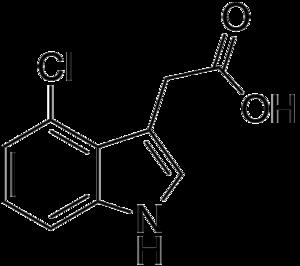 Auxin - 4-Chloroindole-3-acetic acid (4-CI-IAA)