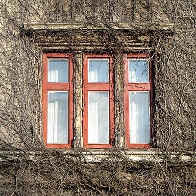 Будинок № 4 на вулиці Коцюбинського, Броди. Автор фото — Aeou, ліцензія CC-BY-SA-4.0