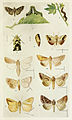 67-Indian-Insect-Life - Harold Maxwell-Lefroy - Noctuidae.jpg