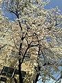 6 Chome Roppongi, Minato-ku, Tōkyō-to 106-0032, Japan - panoramio - hello-go (5).jpg
